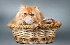 6 правил выбора котенка